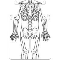 Roylco Skelett-Schürze zum Selbstgestalten